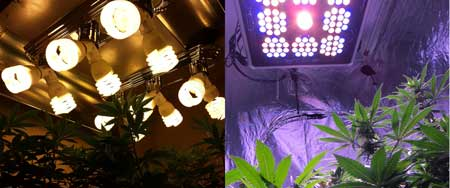 Growing cannabis with CFL grow lights vs Growing cannabis with LED grow lights