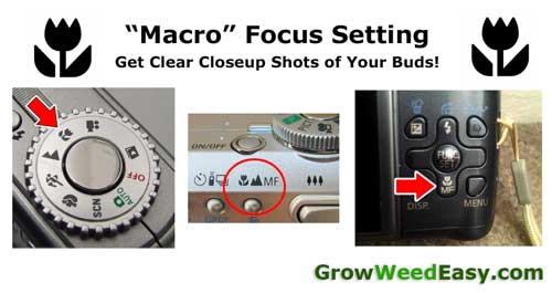 "Use ""Macro"" focus mode to get clear pictures of your buds"