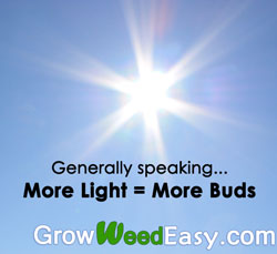 With marijuana plants, generally more light = more buds