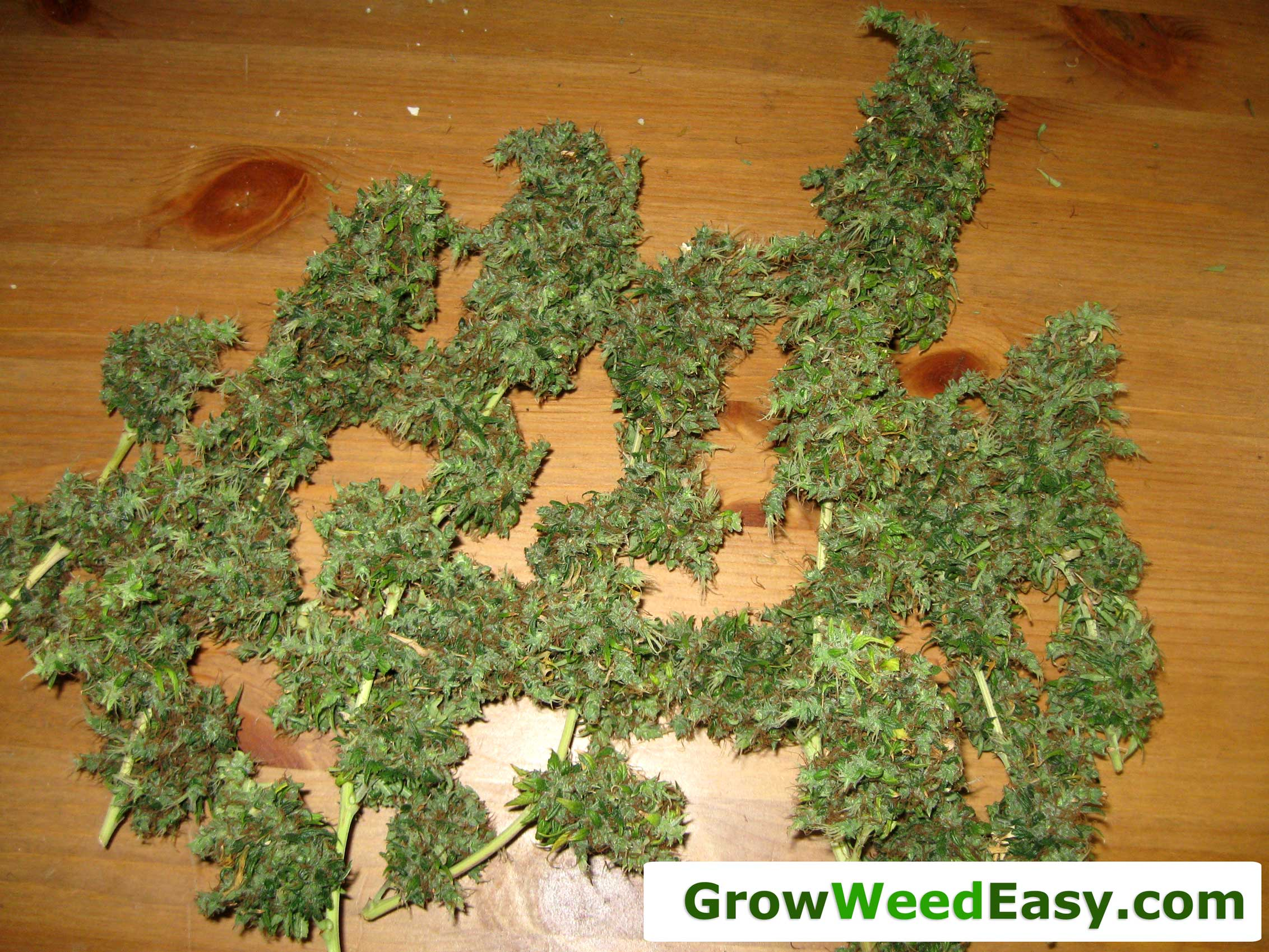 What Do I Need To Get Started Growing Cannabis Indoors Grow Weed Easy