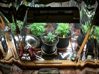 Inside of the grow cabinet!
