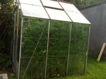 A greenhouse helps contain heat as well as help hide cannabis plants from view