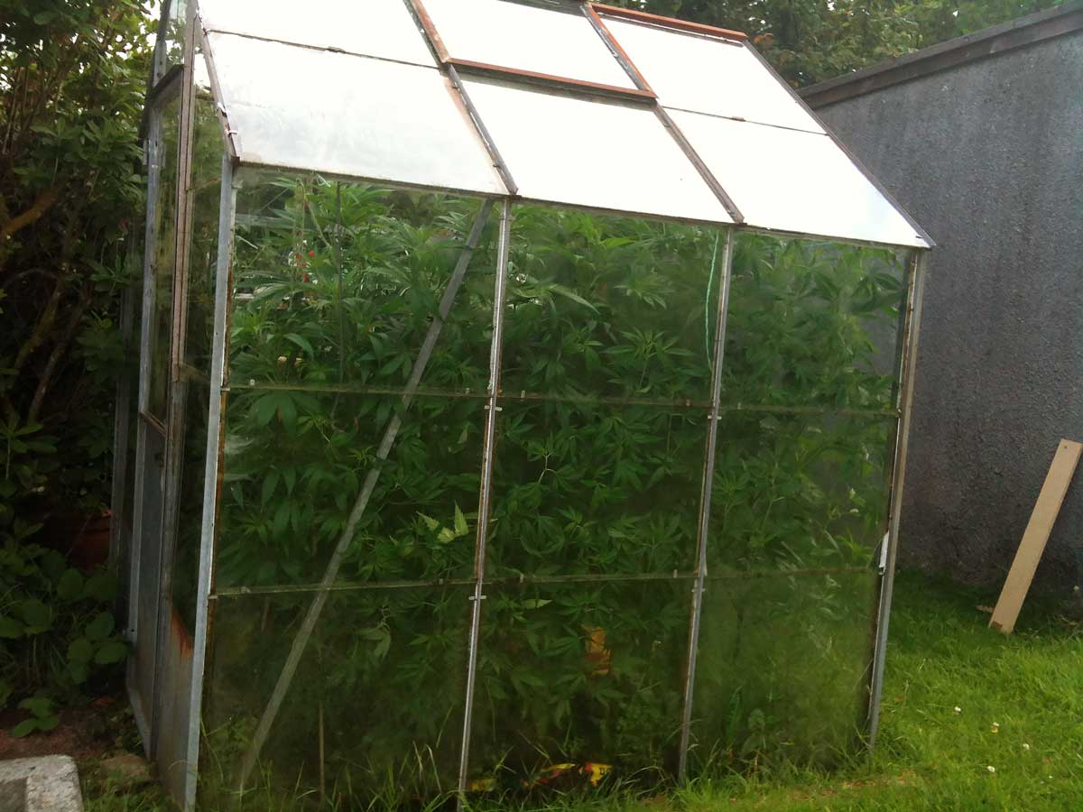 Ex&le of a homemade outdoor greenhouse - most greenhouses can be converted for Light Deprivation without & Light Deprivation Technique (Get More Outdoor Harvests u0026 Better ...