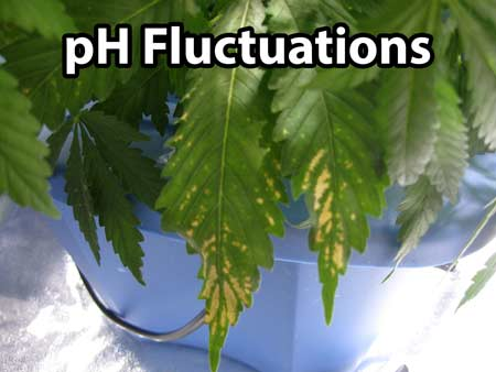 PH Fluctuations can cause strange brown spotting on your cannabis leaves