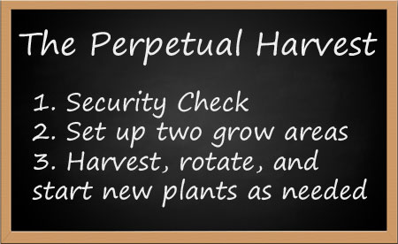 The Perpetual Harvest in steps