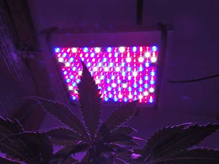 Pro-Grow 400X in action