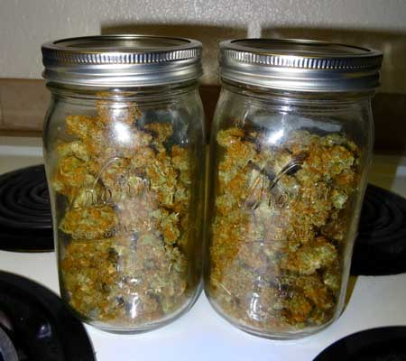 Sour Diesel auto-flowering buds in a jar