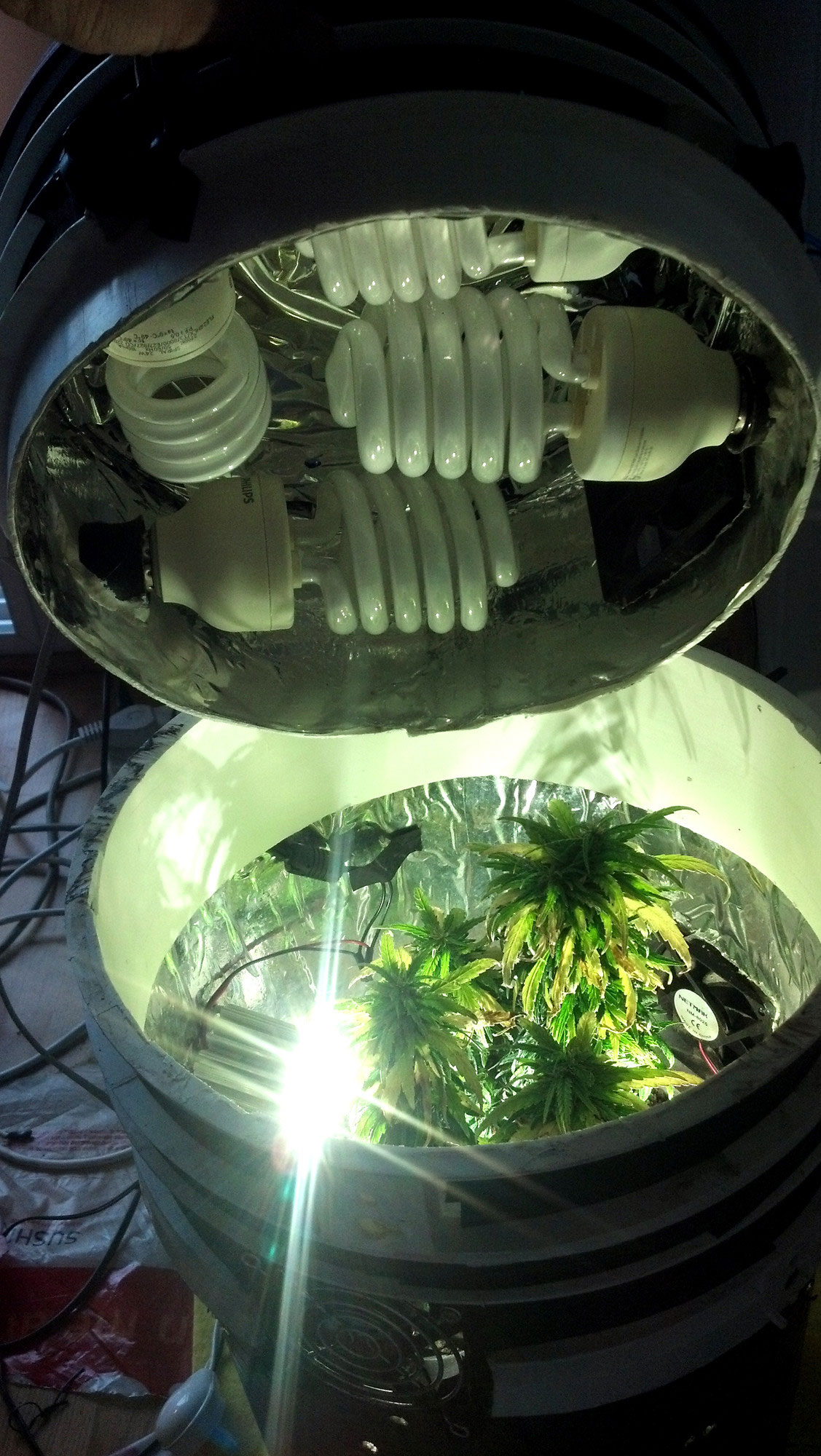 space buckets start growing marijuana for 100 grow. Black Bedroom Furniture Sets. Home Design Ideas