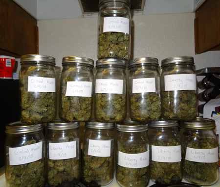 Put your buds in jars for the cannabis curing process