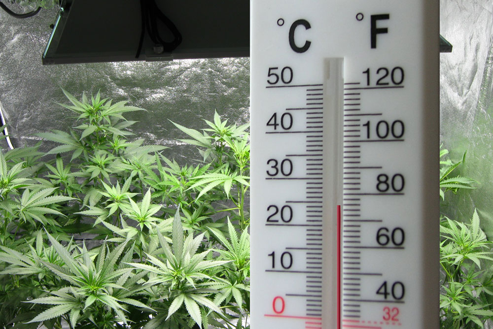 The temperature in your cannabis grow room is important to success & Cannabis Temperature Tutorial: How to Control Heat in the Grow ...