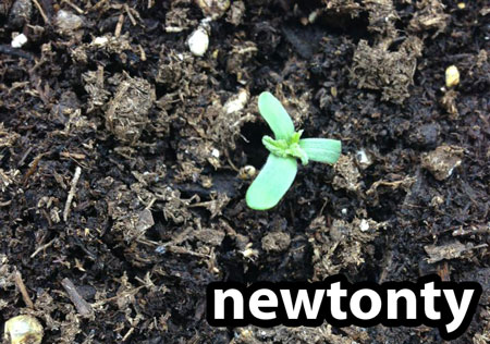 Tri-leaf cannabis seedling - this is a relatively common mutation and you should treat the seedling like any other cannabis seedling
