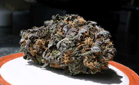Vadar x Granddaddy Purple cannabis nug - DARK purple!