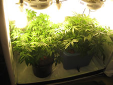 An example of a vegetative tent. This tent uses about 400w of LED and CFLs combined.
