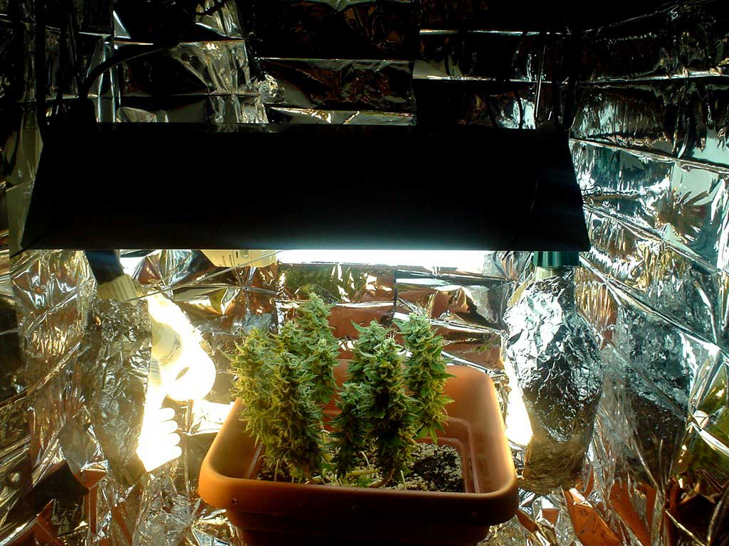 how to build a cheap grow box for weed