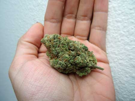 "This cannabis bud was well trimmed, giving it a ""tidy"" appearance"