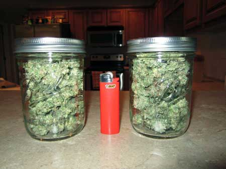 Example of a Space Buckets Harvest - White Widow buds jarred up