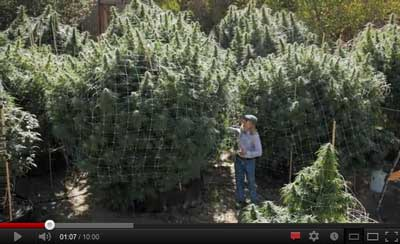 Jorge Cervantes Takes Your on A Tour of the Coolest Outdoor Growing Spots - video