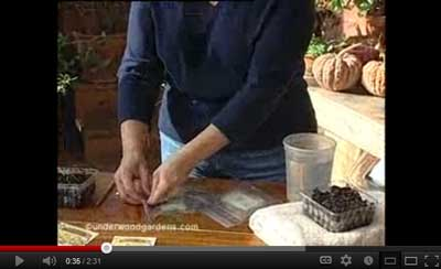 How to germinate seeds with paper towels video