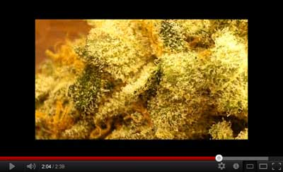 Sticky marijuana buds with trichomes video by KoMA Trichome