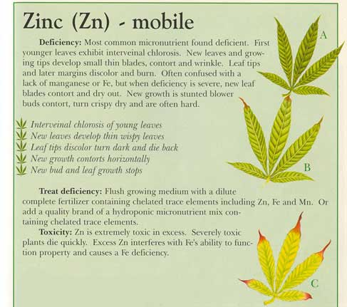 Zinc deficiency grow weed easy for Soil zinc deficiency