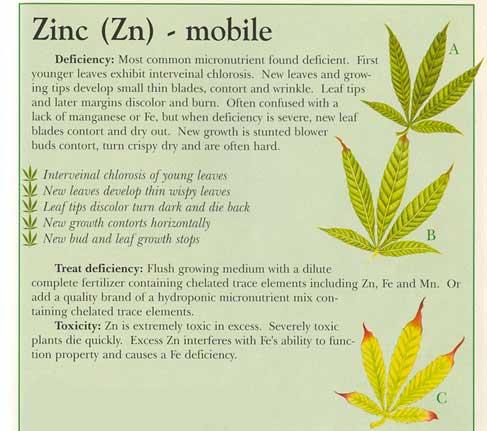 zinc-info-marijuana.jpg