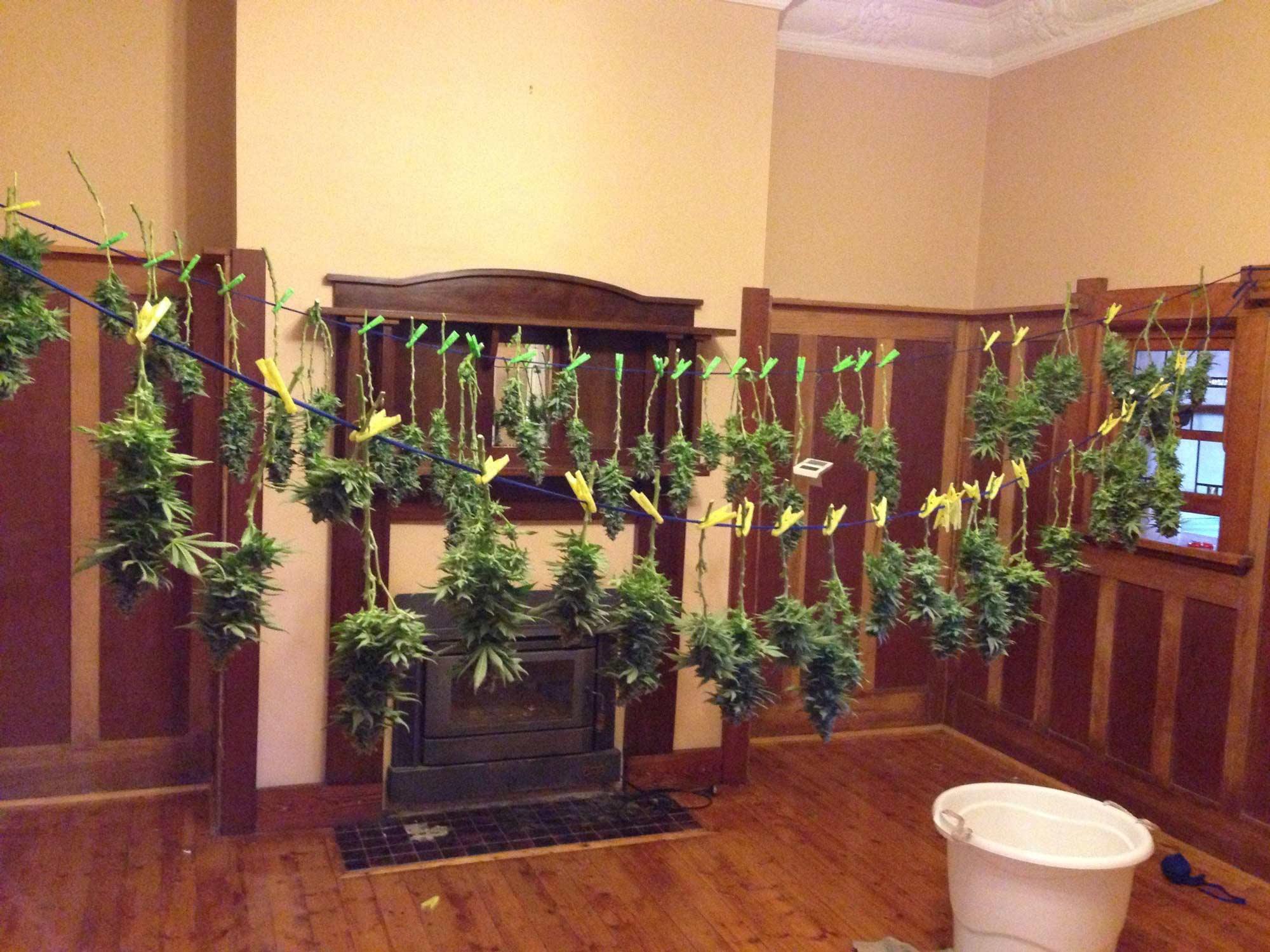 Learn How To Grow Cannabis Indoors Grow Weed Easy