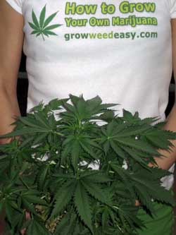 How to Grow Your Own Marijuana - by GrowWeedEasy.com