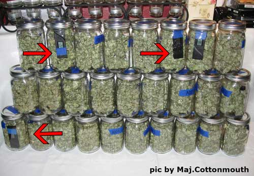 Marijuana buds curing with Hygrometer III hydrometers