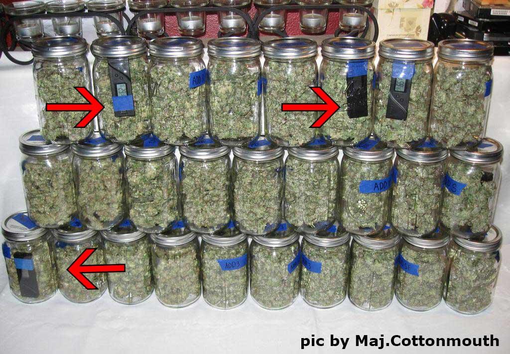 Original Guide to Drying and Curing Marijuana Buds | Grow ...