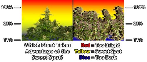 Natural vs LST - Understanding the Grow Light Sweet Spot Diagram