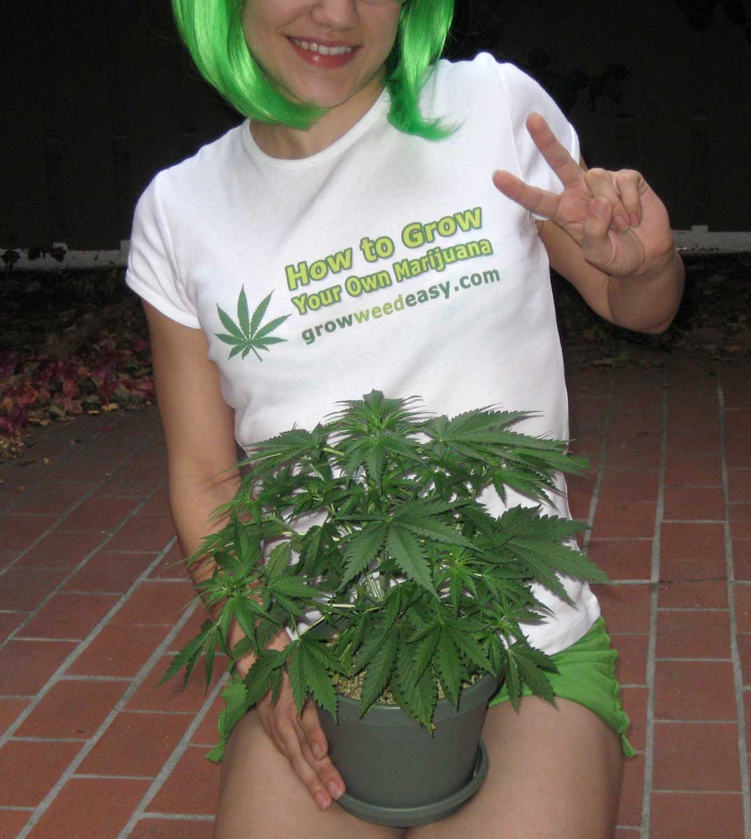 How Do I Transplant Marijuana for Faster Growth? | Grow Weed Easy