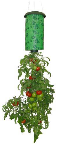 A Topsy Turvy container is meant for tomatoes, which hang down - check them out on Amazon.com!