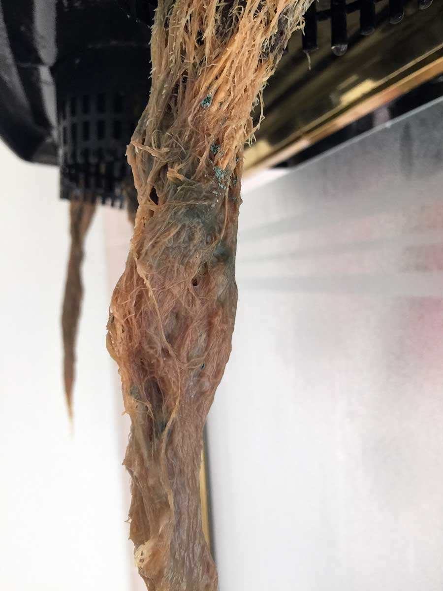 How to Get Rid of Root Rot | Grow Weed Easy