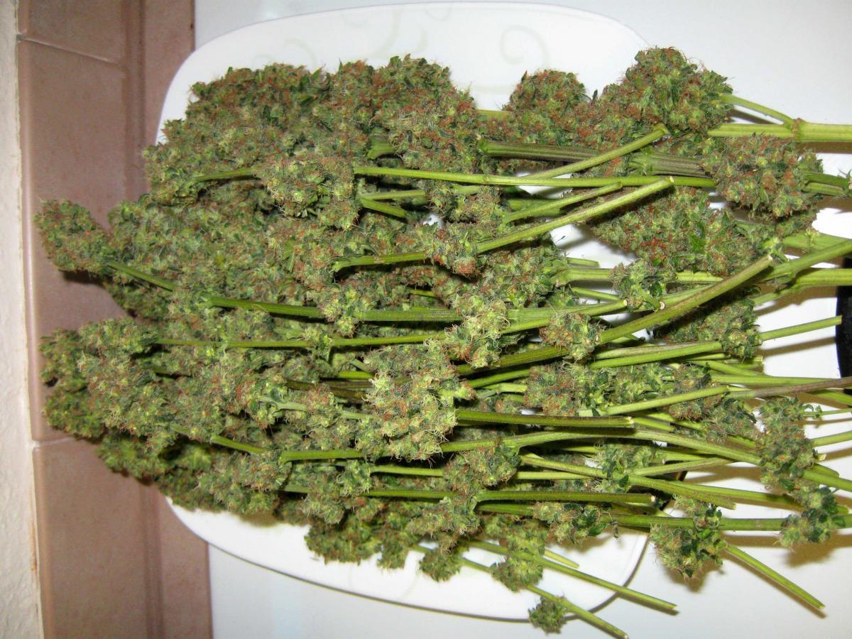 Can You Really Grow Marijuana With Leds Grow Weed Easy