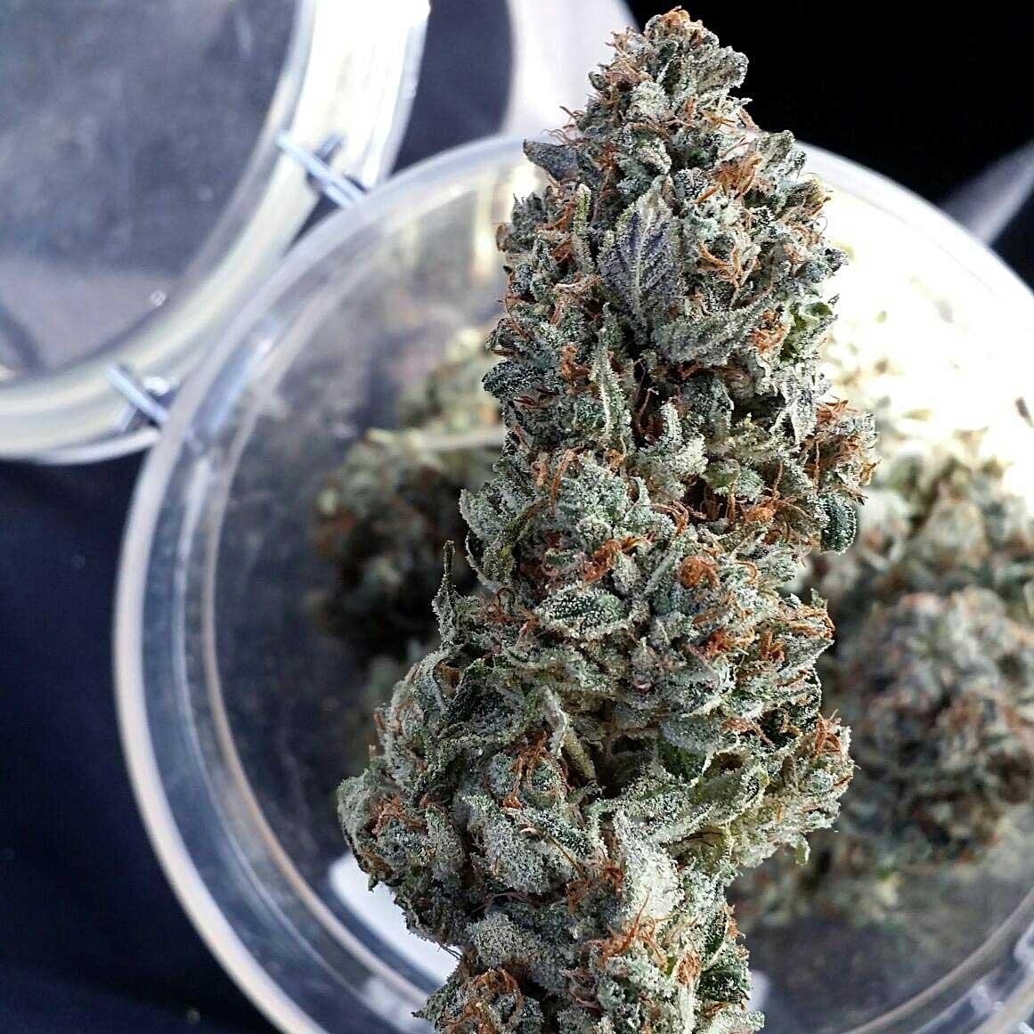 Как усилить действия конопли марихуана на курсе