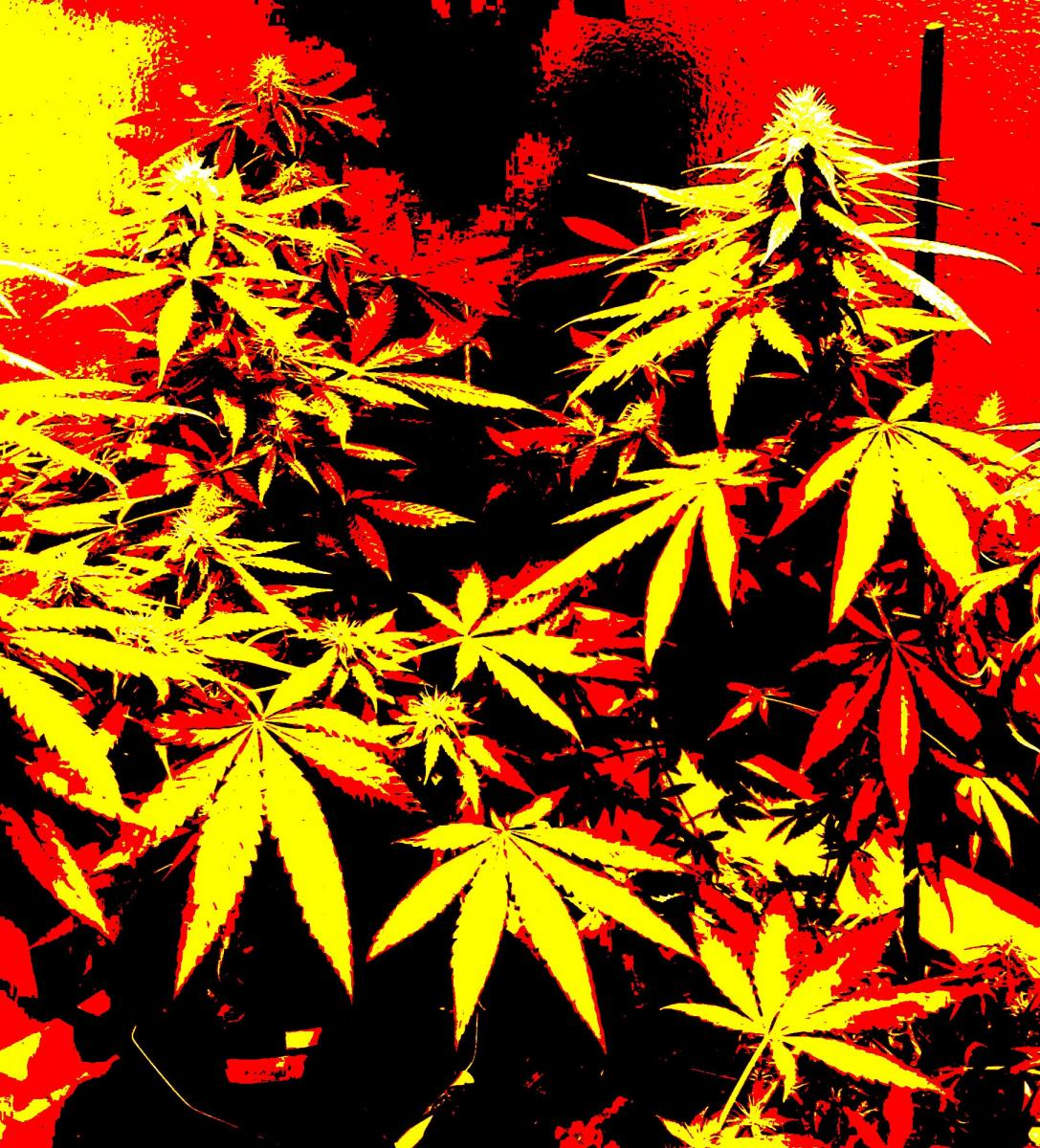 how to grow weed simple