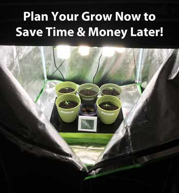 Where is the best place in your house to grow your very own cannabis garden? Plan your grow now to save time and money later!