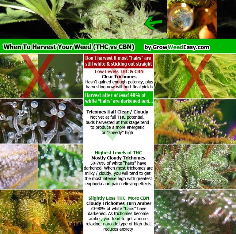 How Do THC, CBN & CBD Relate to Marijuana Potency? | Grow