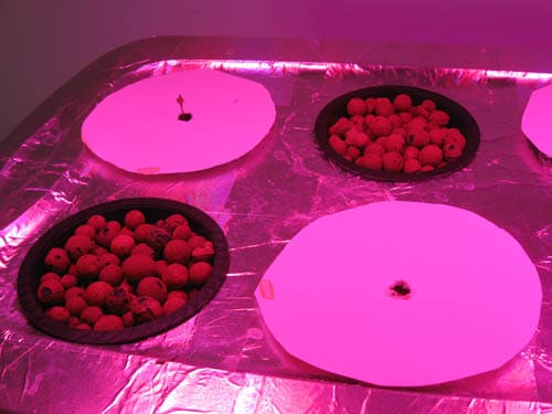 Plate covers when growing Stealth Hydro Marijuana