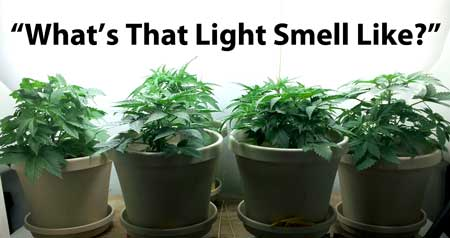 "When a young cannabis plant is under the light, it's doing more than eat, it's asking itself, ""What does that light smell like?"""