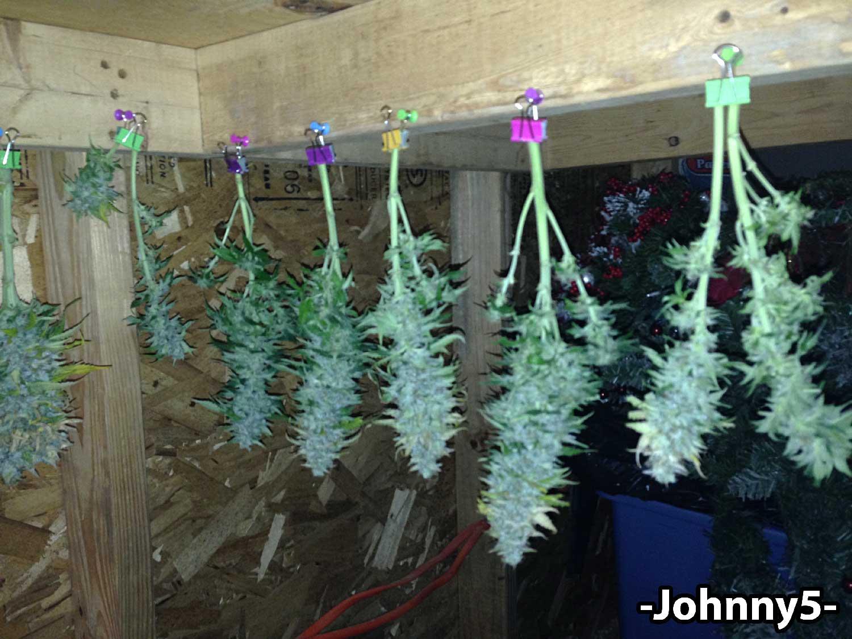 Dry Cure Cannabis Buds Like An Expert Grow Weed Easy