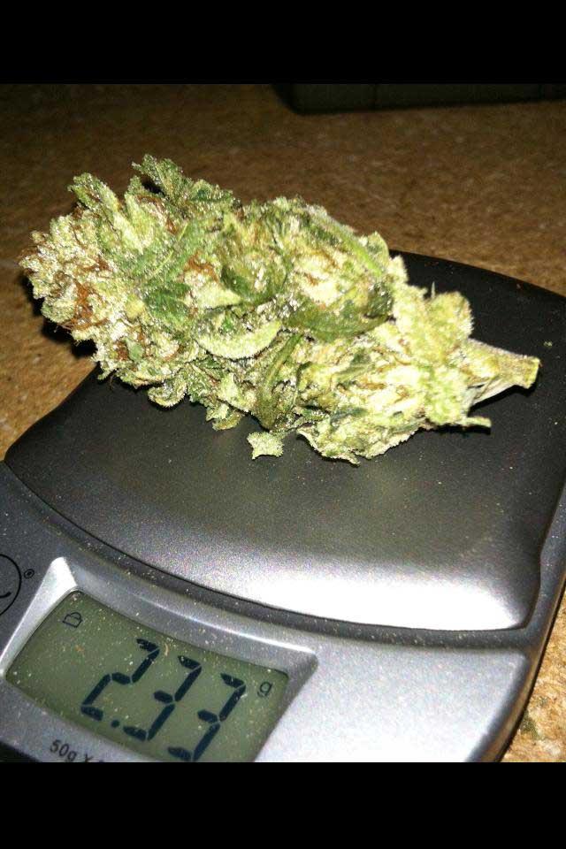 Сколько в весе конопли организм после отказа от марихуаны