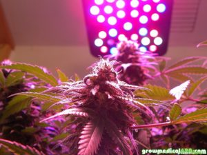 The Pro-Grow X5 – Using X-Lens Tech