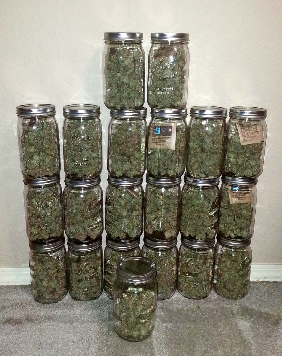 Harvest tips: a guide to drying and curing cannabis buds | wegrow.