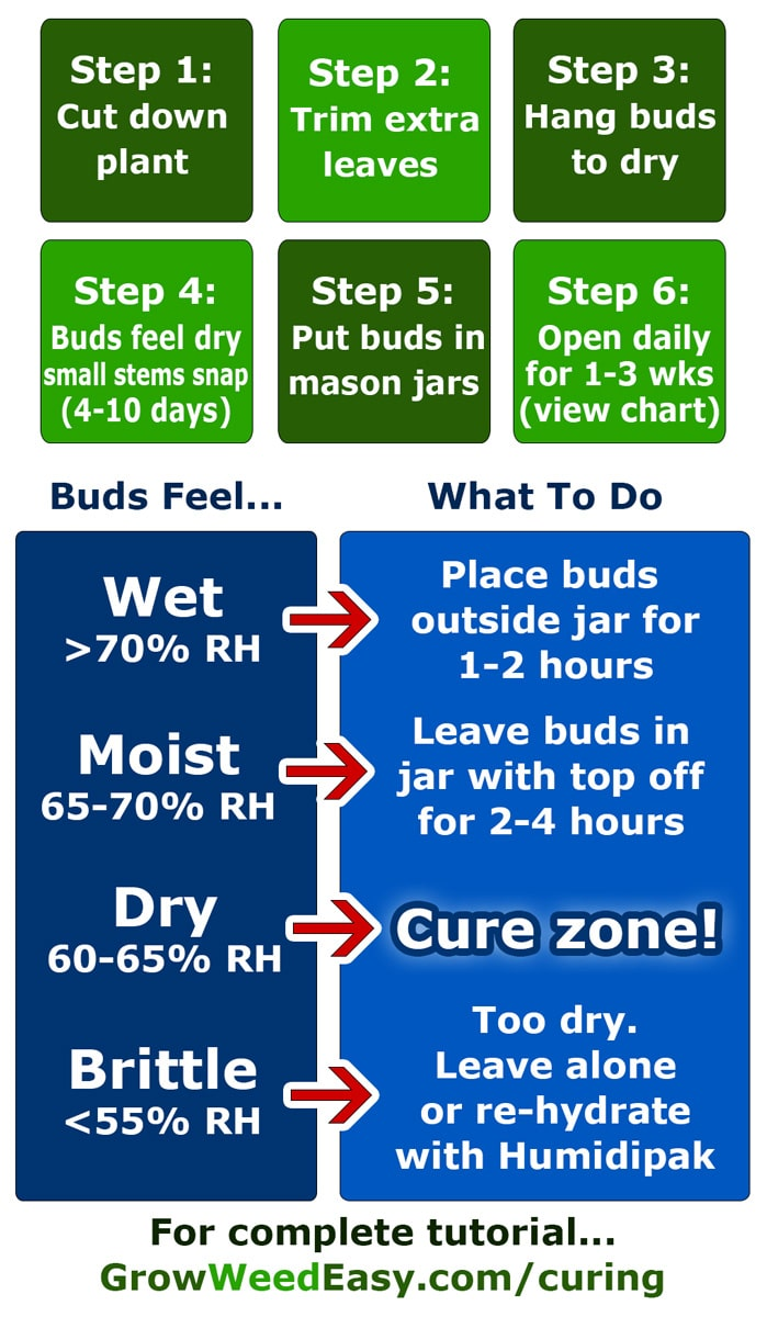 Original Guide To Drying And Curing Marijuana Buds