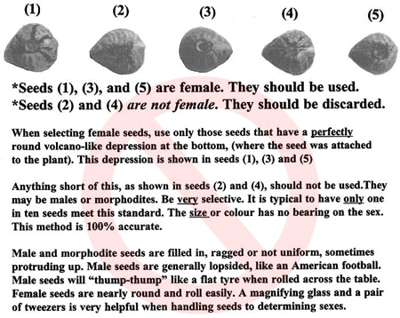 Example of a chart you SHOULDN'T follow to identify cannabis plant gender! Click for closeup