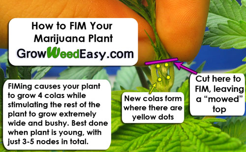 How to FIM your plants!