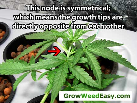 Try to choose symmetrical nodes to top, when possible