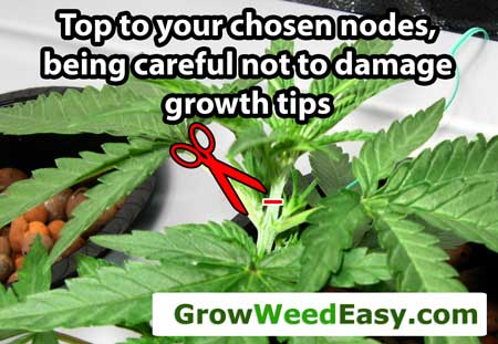 Top to your chosen node, being careful not to damage the growth tips