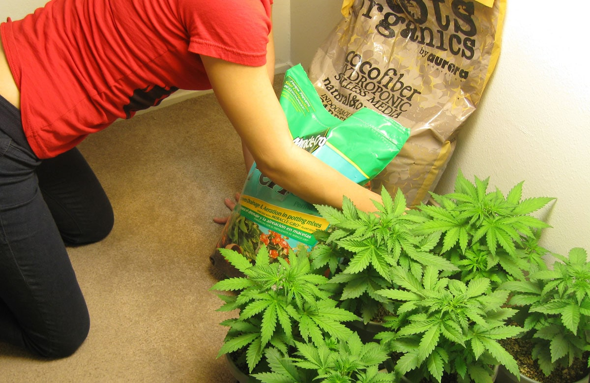 Where Should I Grow In The House Grow Weed Easy